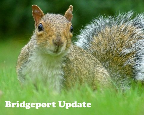 Bridgeport update Squirrel